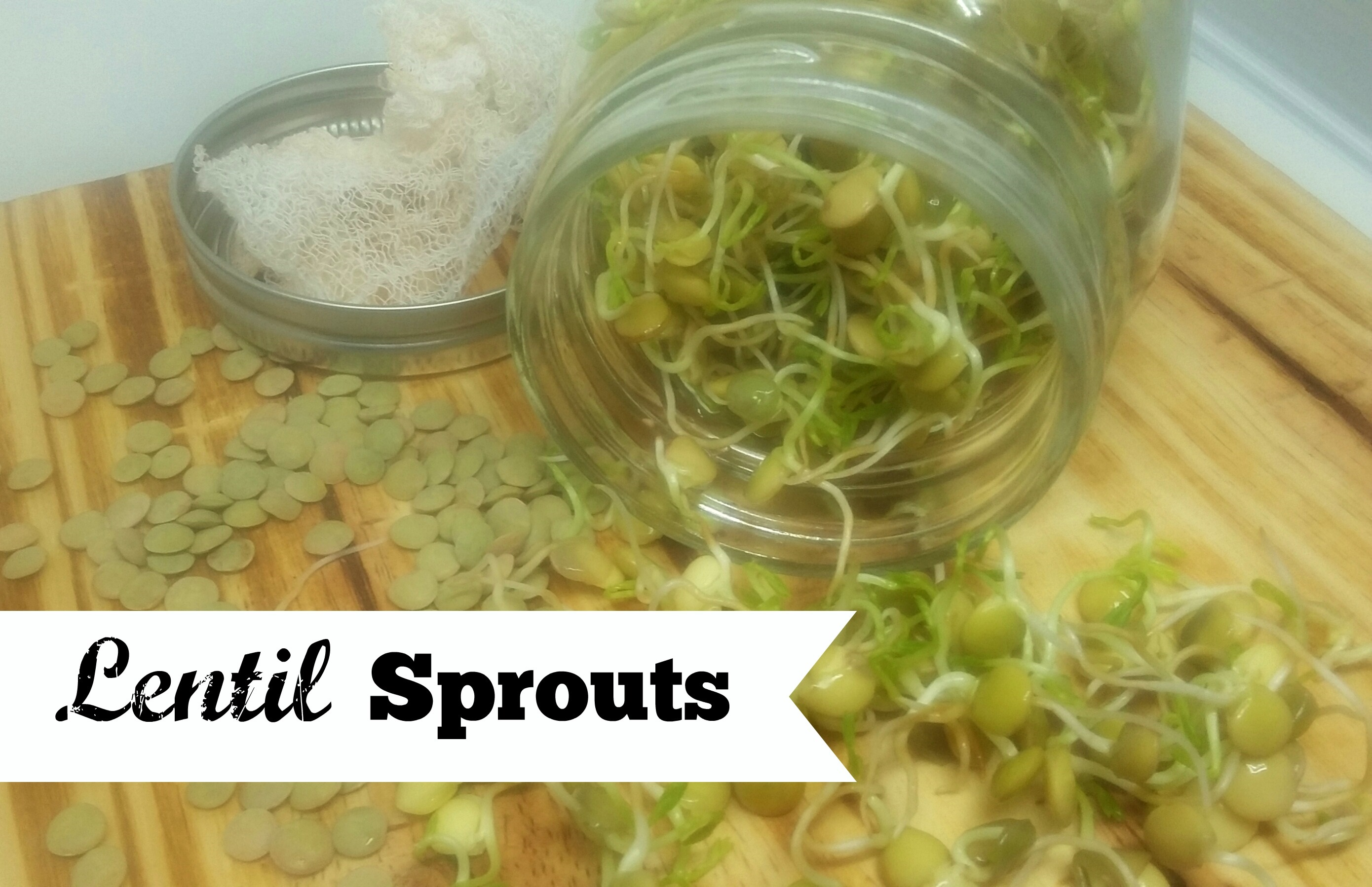 Grow your own sprouts in 30 seconds a day! (Or less.)